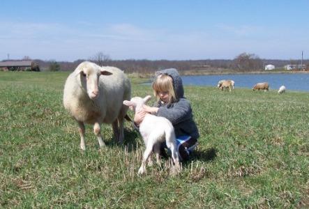 Turkey Run Australian Shepherds - Breeders of australian shepherds